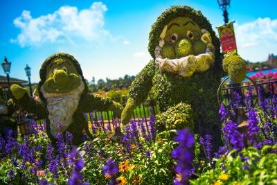 Flower Dwarfs