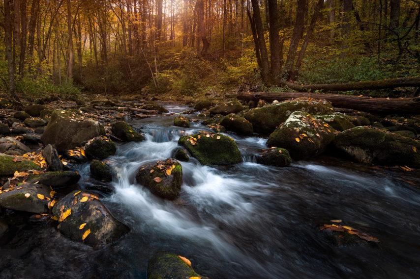 Smoky Mountain Fall Streams